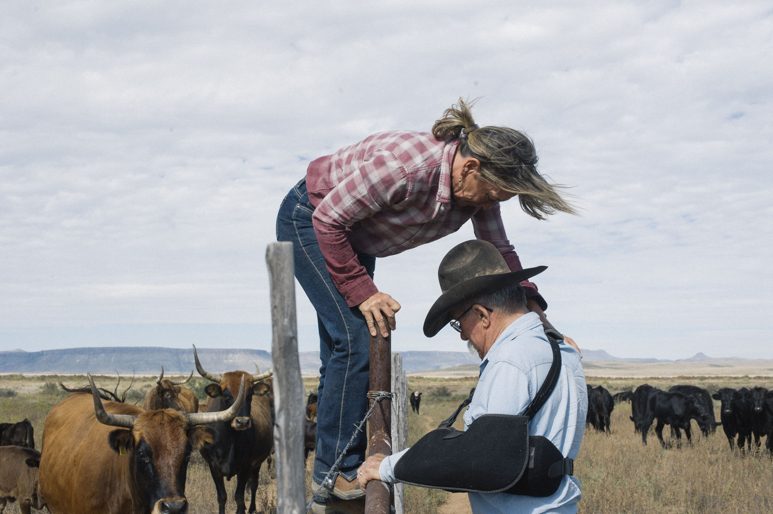 Joel Nelson helps his wife Syliva over one of their fences while out feeding and counting cattle.