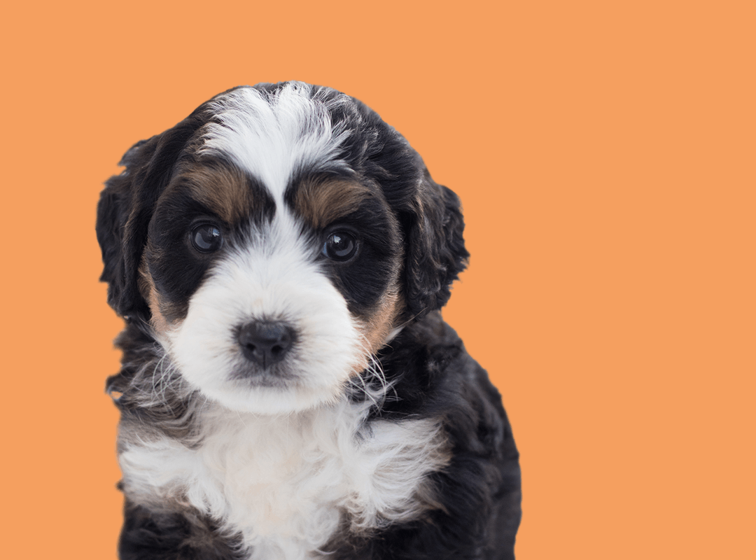 hey-muttley-should-i-use-a-crate-for-my-puppy.png