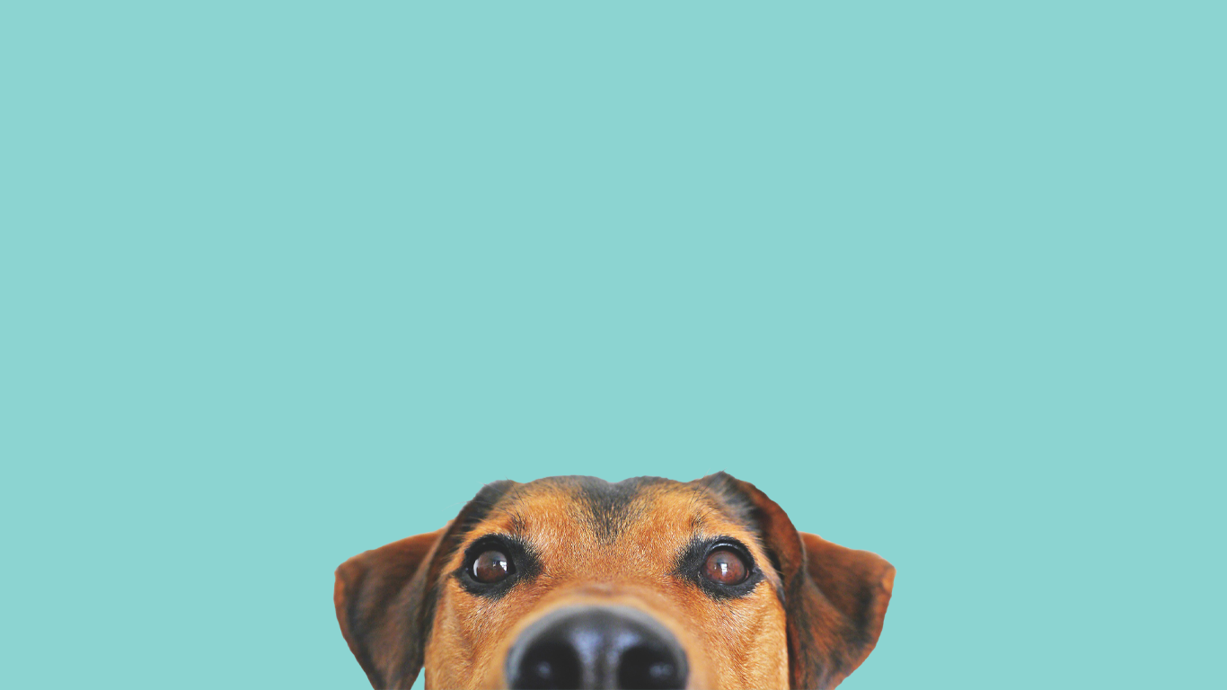 Welcome! - Hey Muttley is on a mission to make yours and your pet's life amazing! To make owning a pet as simple as possible. Giving you the information and chat about your bestie. Join in with our community, be part of the movement.