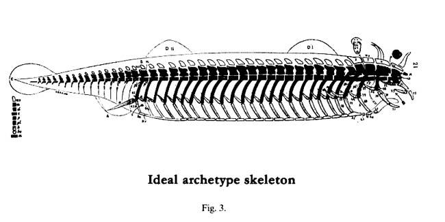 analogy___homology1.jpeg