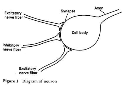 neuron1.jpeg