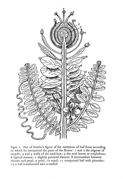 morphology1.jpeg