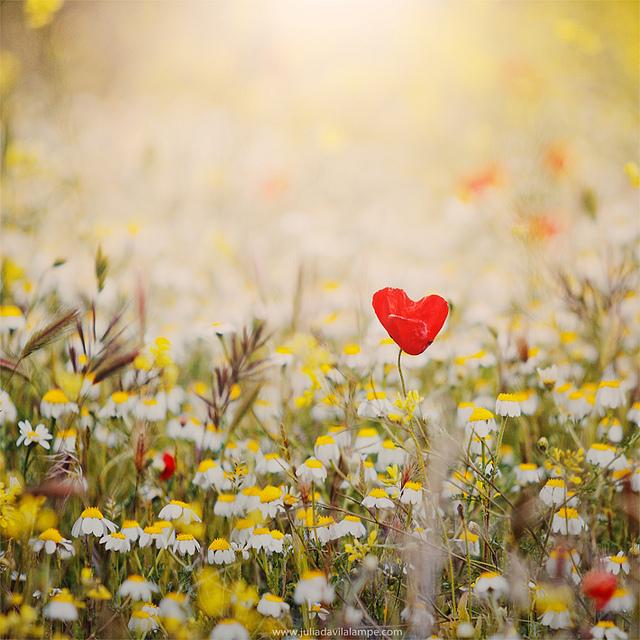 wandering-heart.jpg