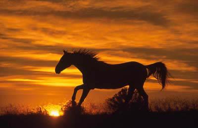Running-Horse-at-Sunset.jpg