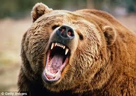 mama-bear.jpeg