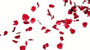 falling-petals.jpeg
