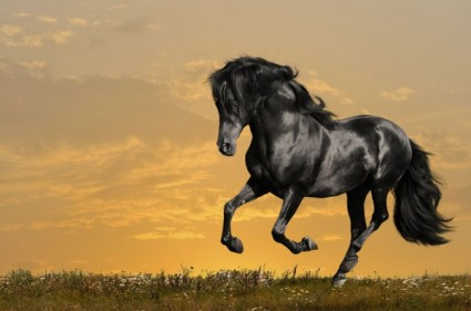 galloping_horses_05_hd_pictures_168952.jpg