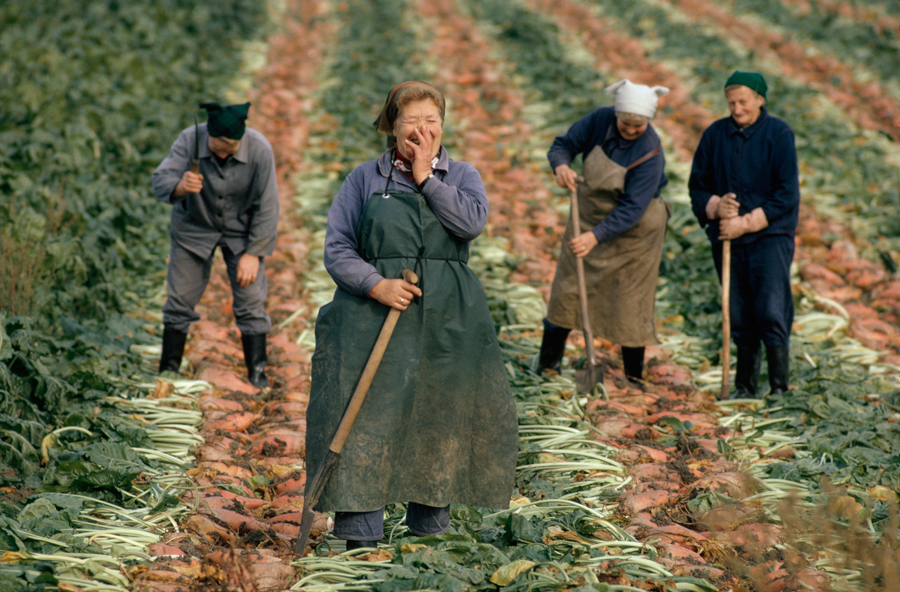 Women harvesting beets in Germany