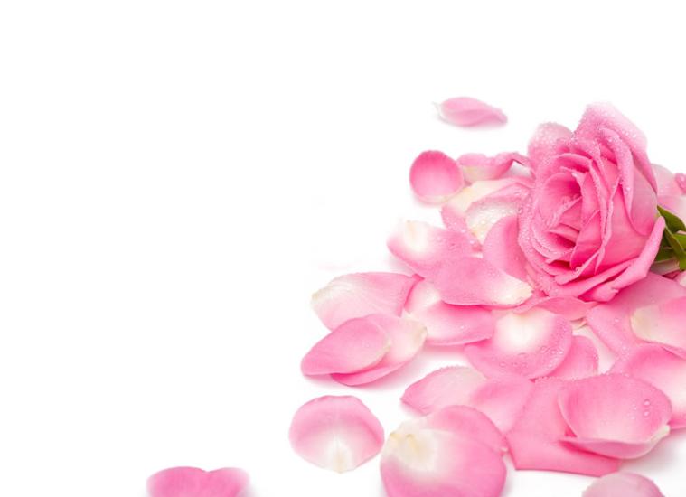 rose-petals-550h.png