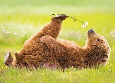 gentleness-bear.jpg