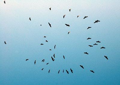 vultures-2.jpg