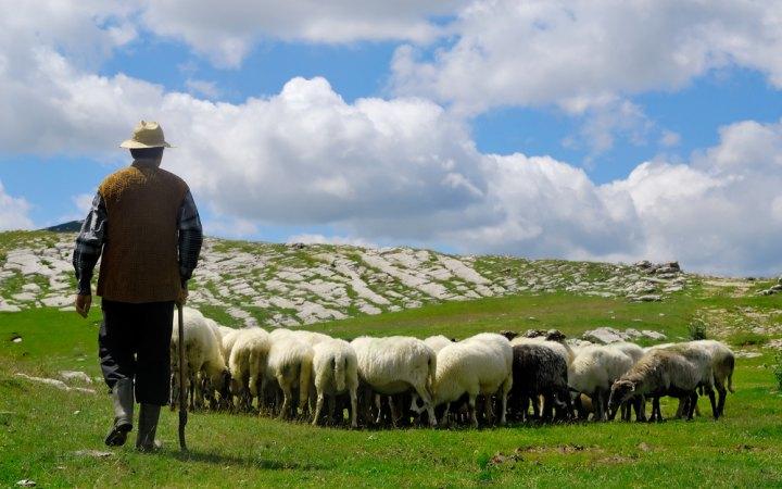 shepherd-and-sheep.jpeg