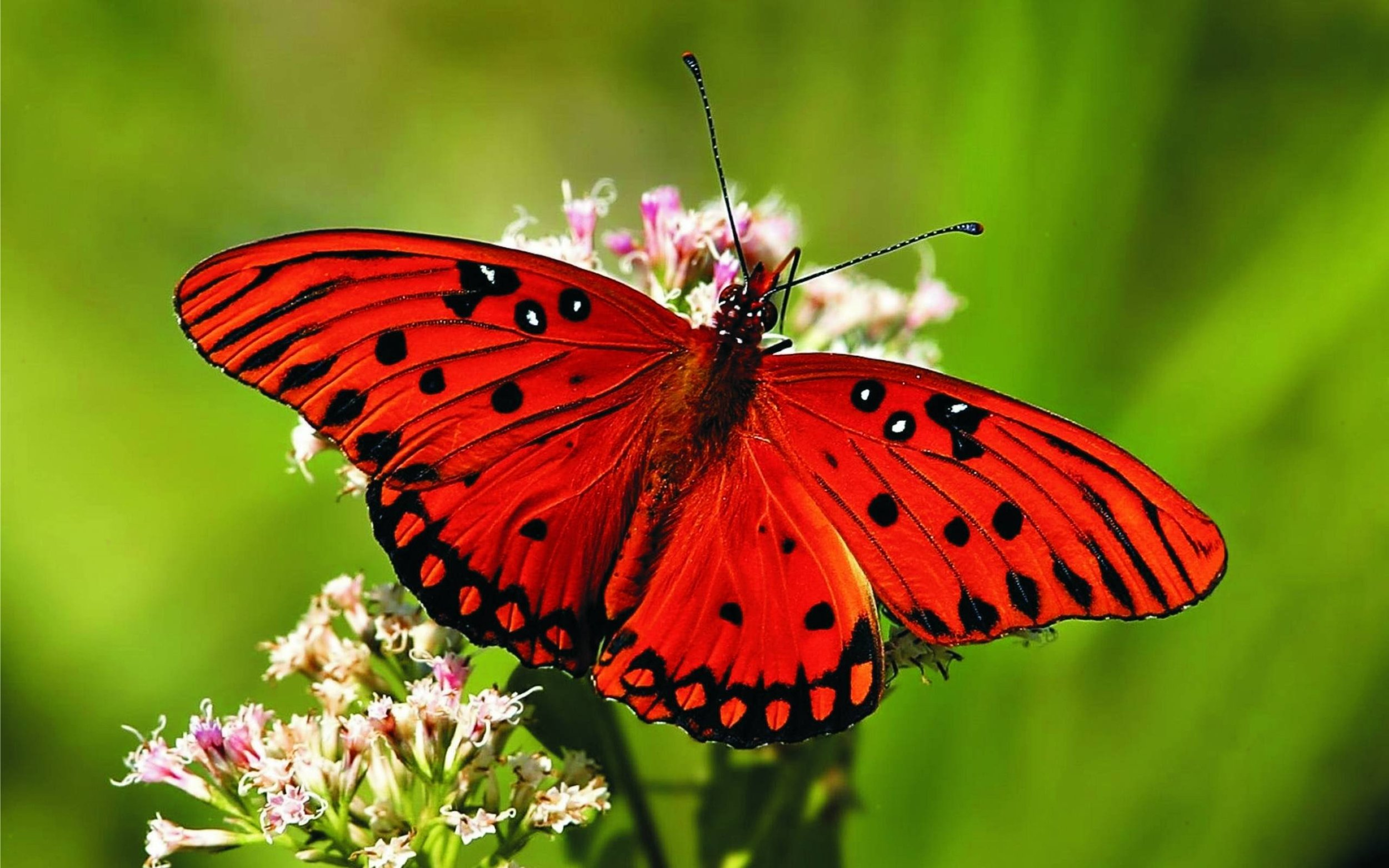 butterfly-2-red.jpg