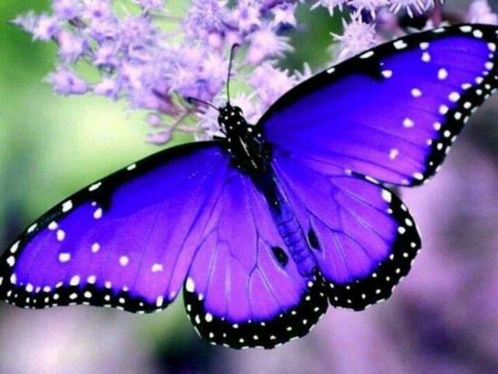butterfly-purple.jpg