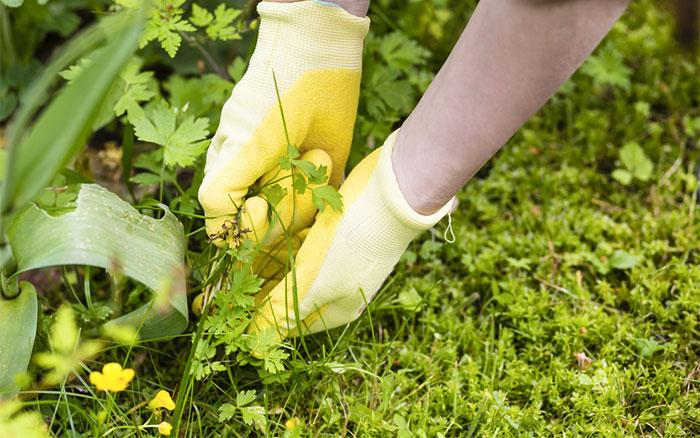 weeding-pulling-garden-weeds-out.jpg