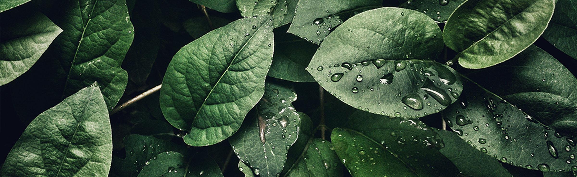 Why Green,Why Elysium -