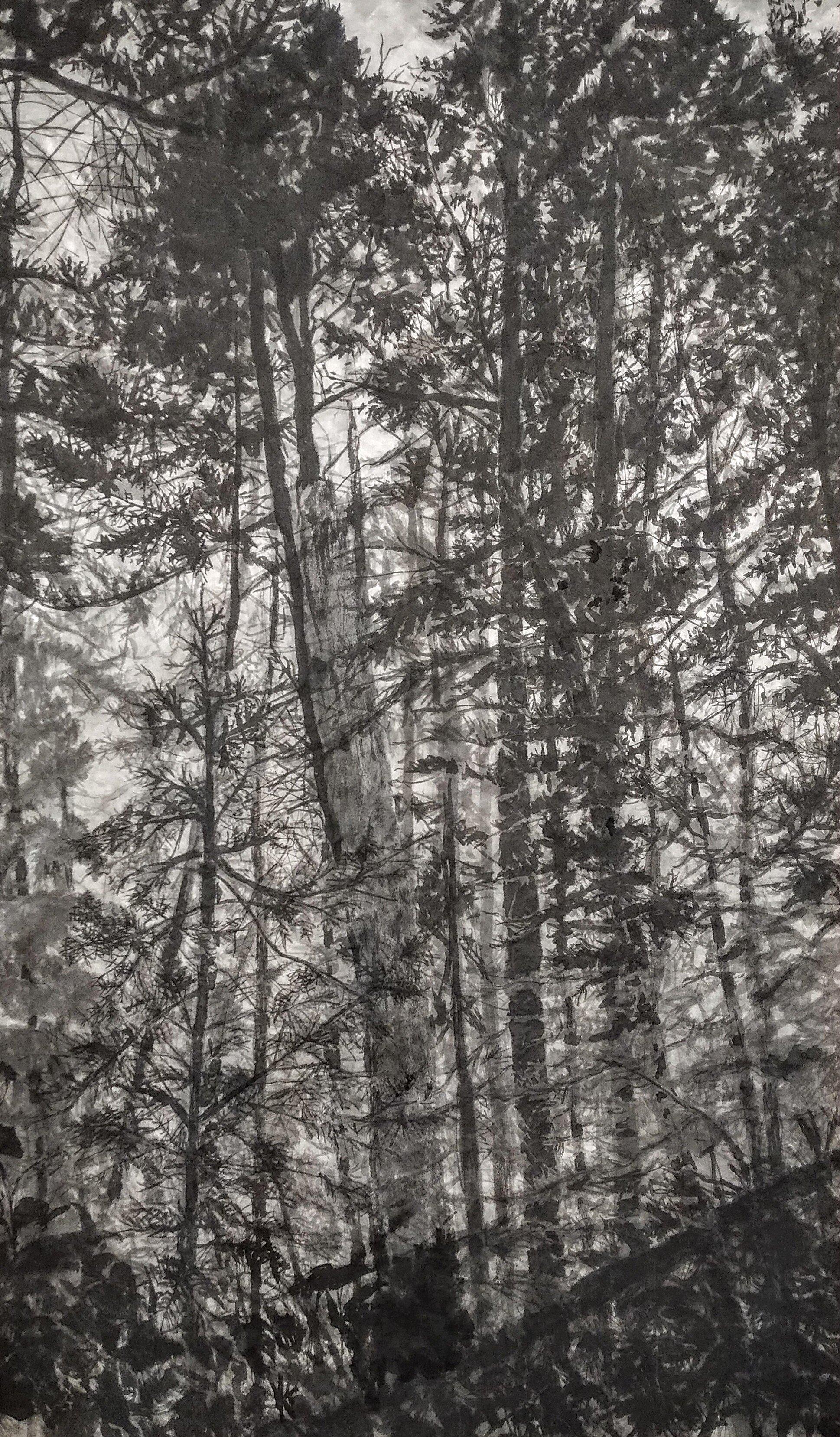 Eliz+woodland+image+1.jpg