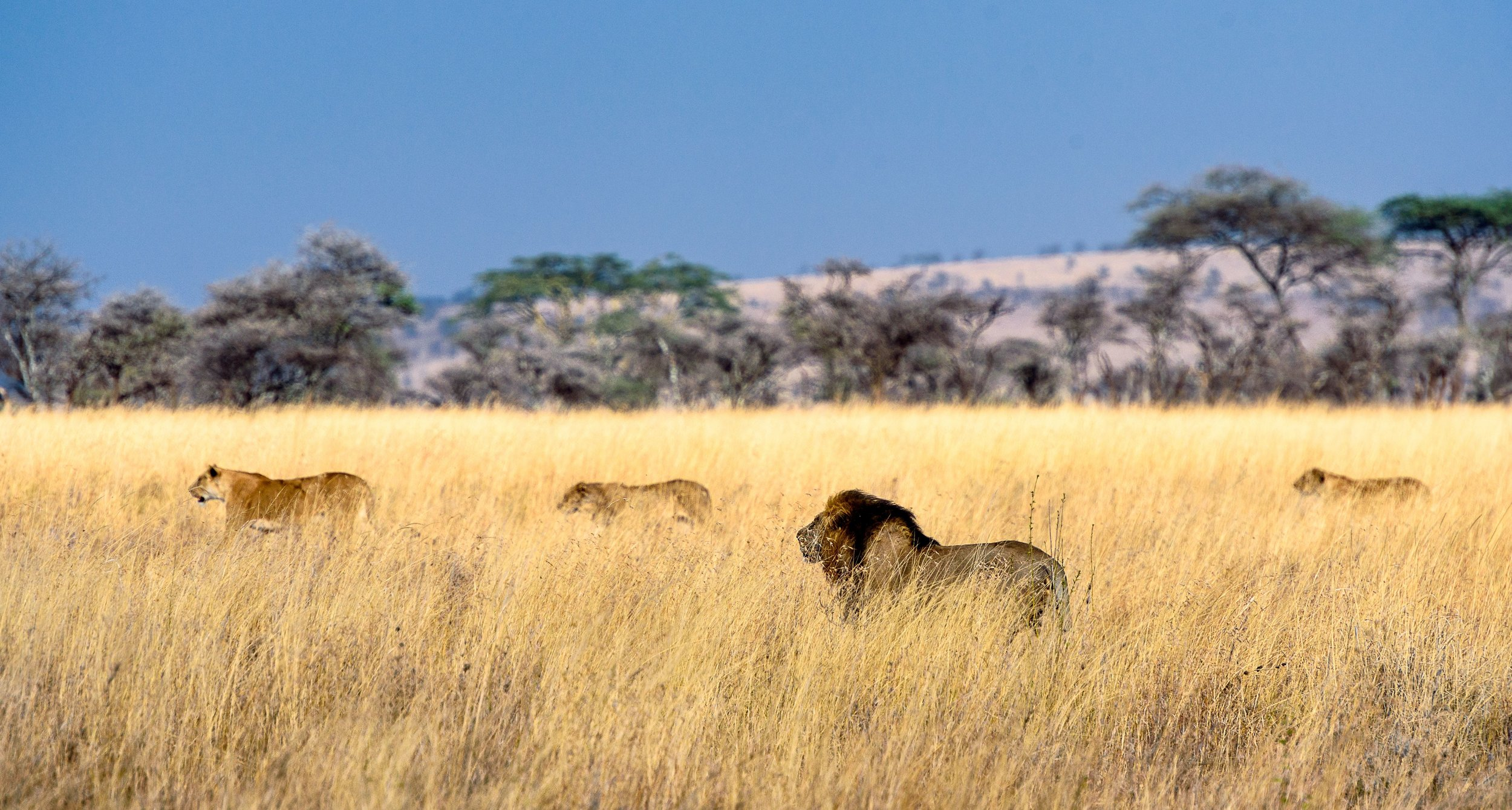 Safari_12.jpg