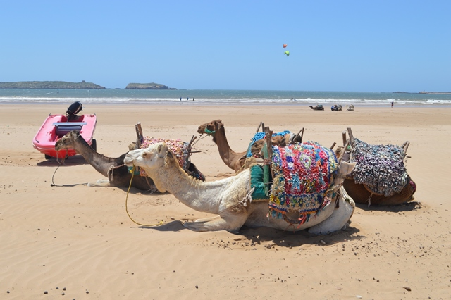 Camel_rides_on_th_beach_in_Essaouira1.jpg