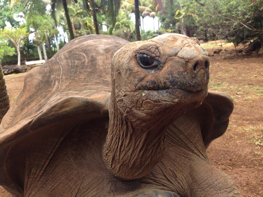 Tortoise-1024x768.jpg