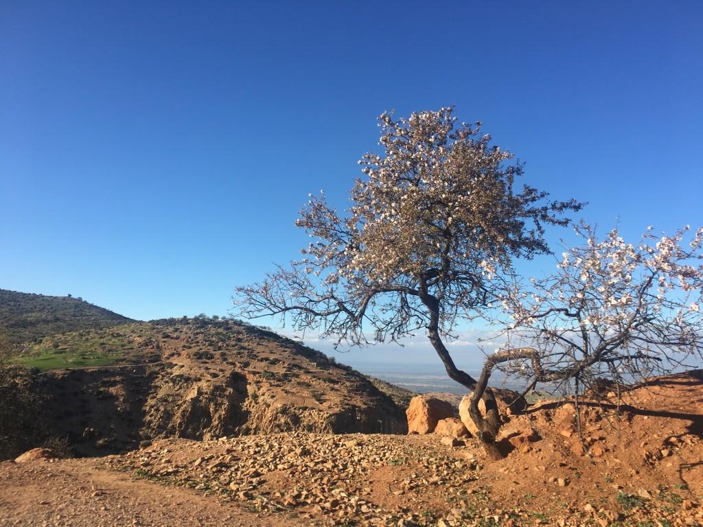Moroccan-Landscape-1024x768.jpg