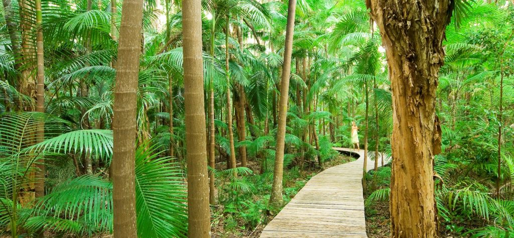 Photo-5-The-Byron-at-Byron-Rainforest-Boardwalk-1024x474.jpg