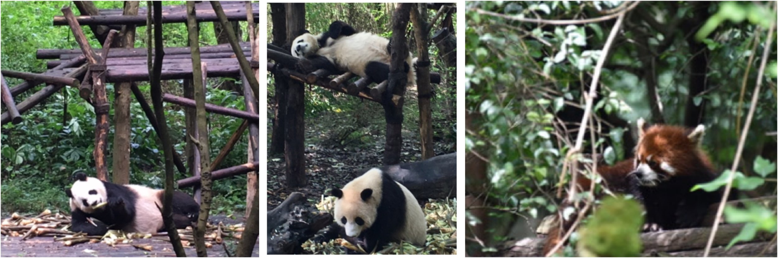 Chengdu and the Panda Reserve.jpg