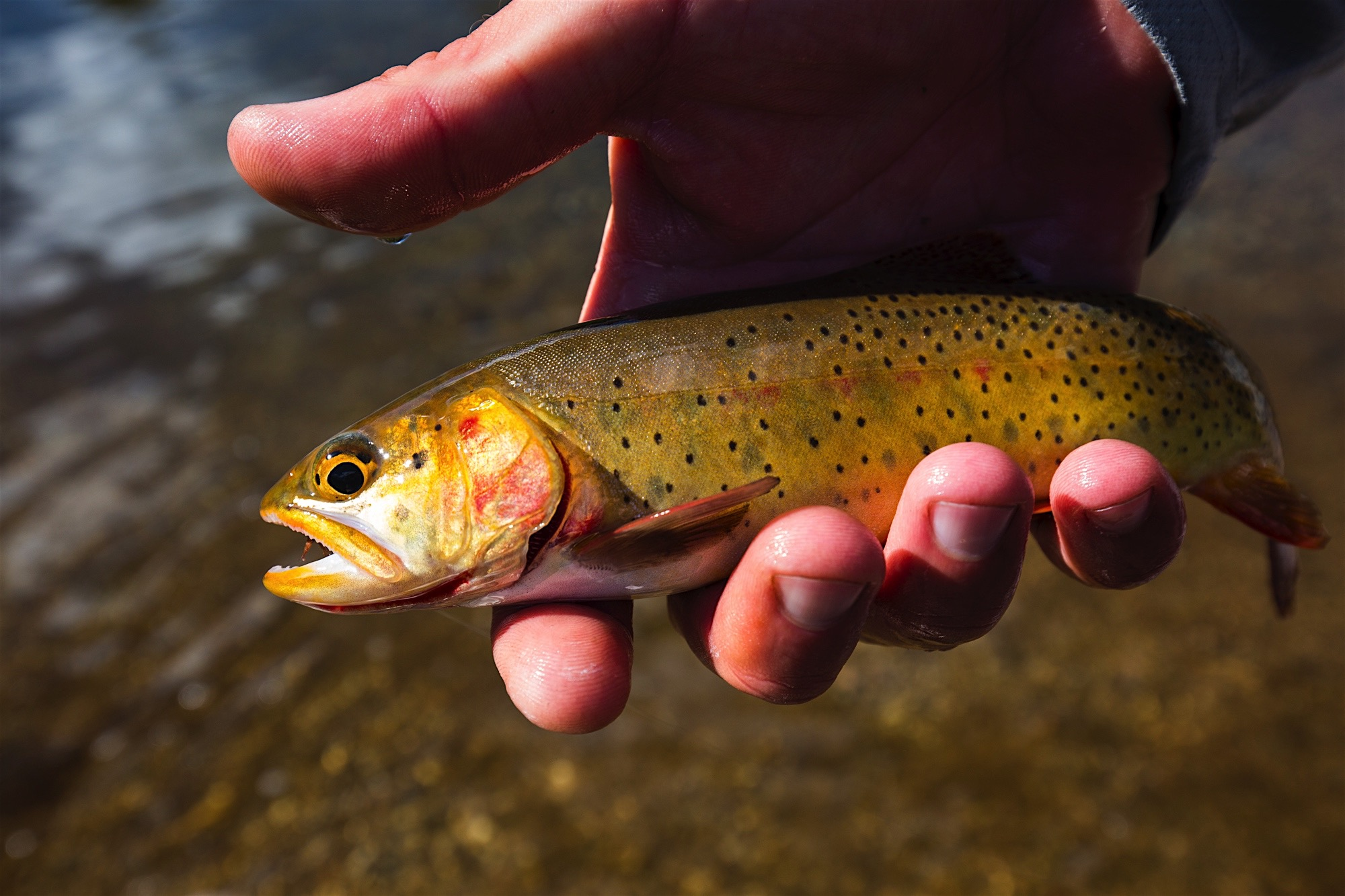 FISHING SHUTTLES -