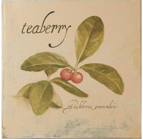 Teaberry.jpg