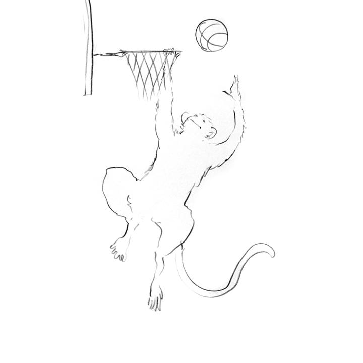 Monkey-Basketball.jpg