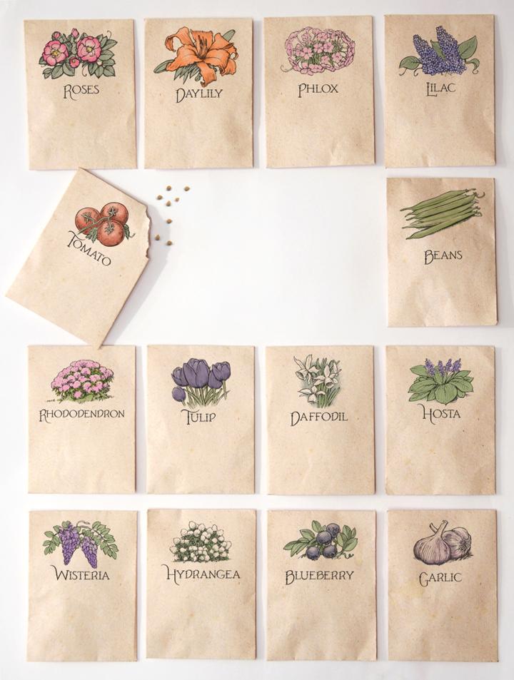 SeedPacketIllustration.jpg