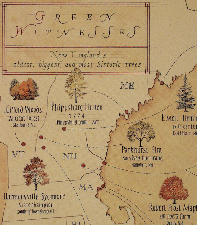 A detail from a Yankee Magazine article about famous trees