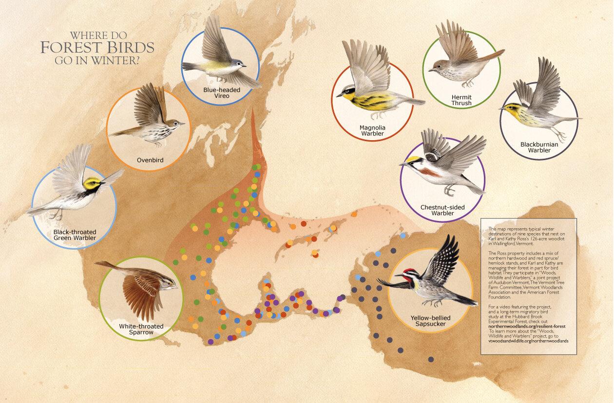 Vermont bird migration activity poster and magazine double spread