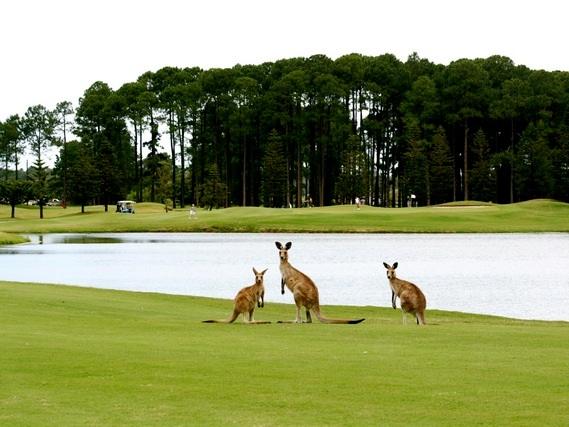 Australia+Golf+Kangaroos.jpg