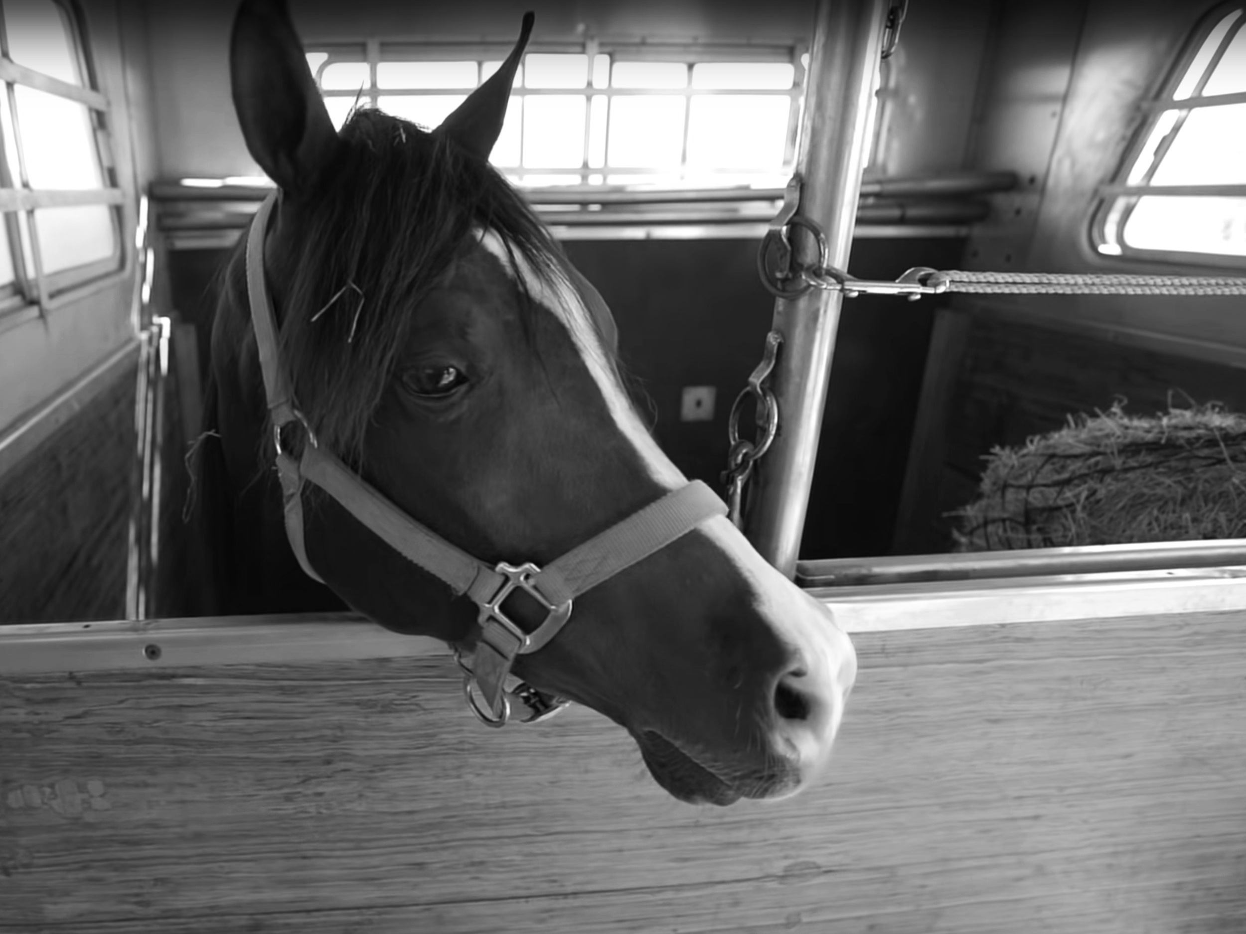 Equine Expressoverview video -