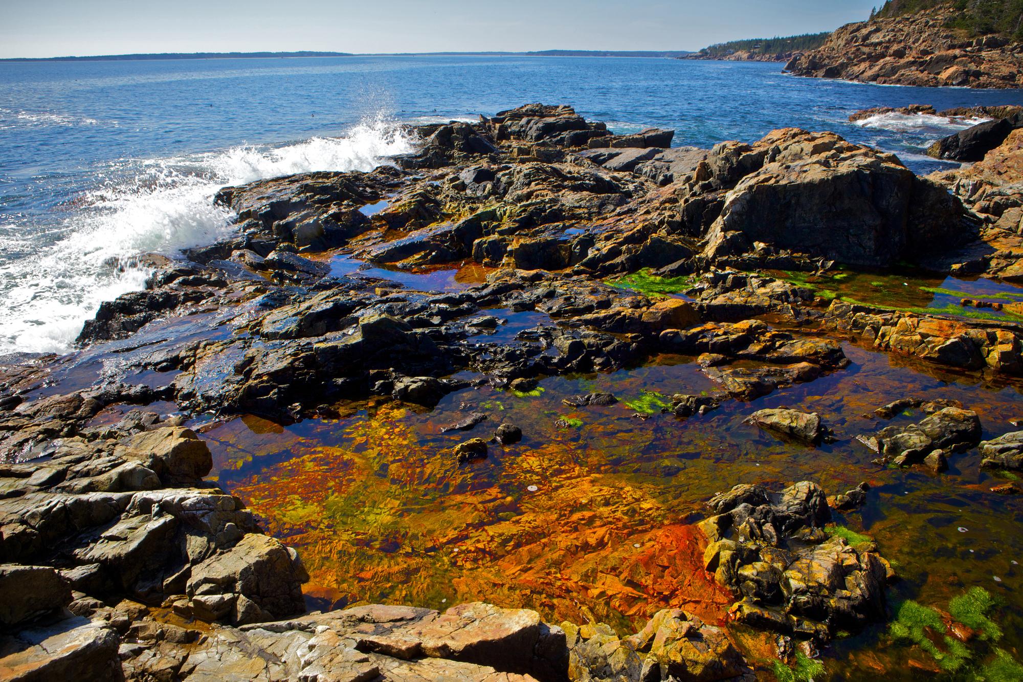 Acadia_Tide_Pools_028.jpg