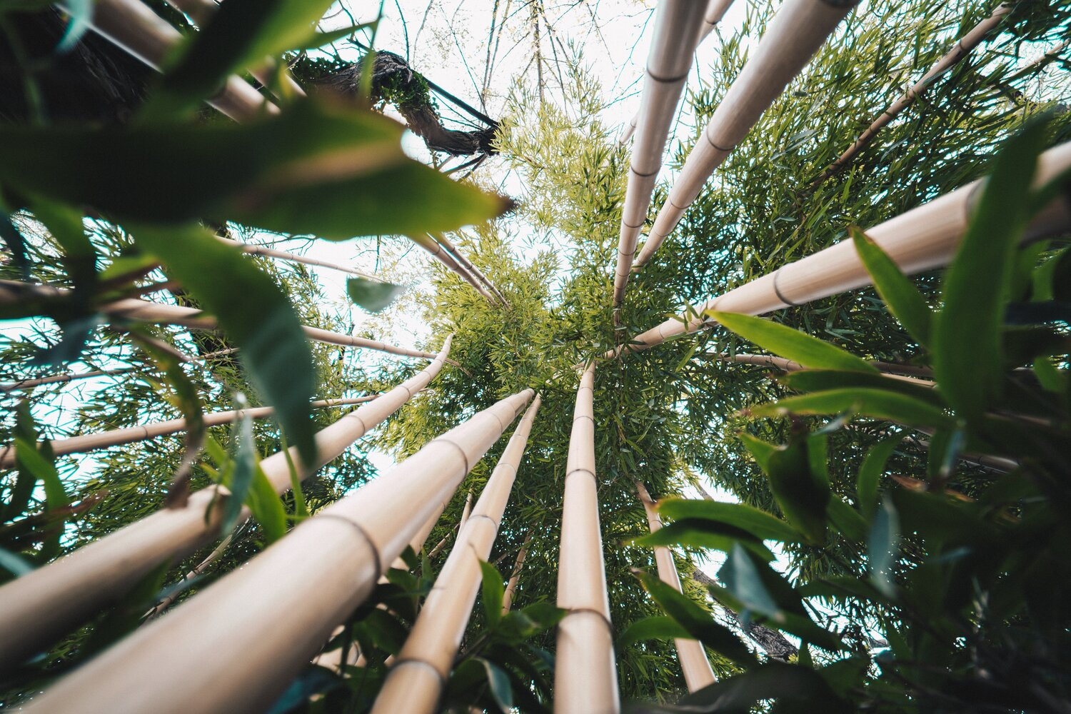 eco-friendly-bamboo.jpg