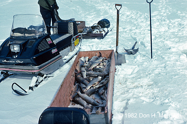 For much of the 20th century Wabamun was known for its large commercial catches of Lake Whitefish.