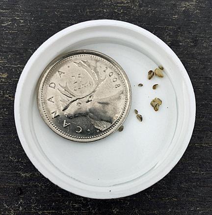 AEPcredit-2017-MusselsFoundonBoat-size-ref.jpg