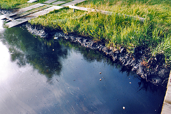 Oil coated the lakeshore and vegetation after the 2005 train derailment.