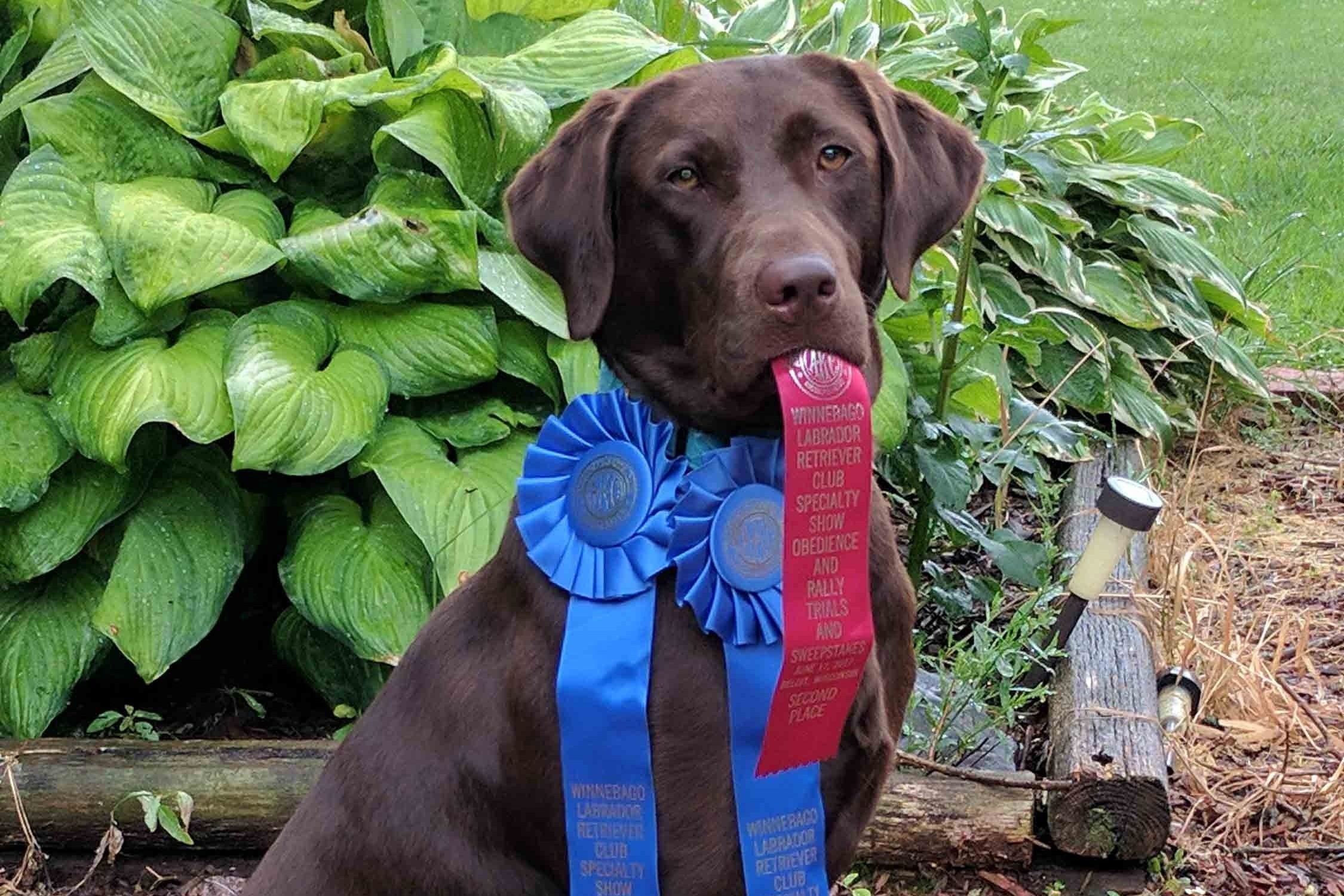 Tracy Harper - Owner & TrainerTracy has over 40 years training and competing dogs at all levels of obedience and rally. Additionally, for the past 15 years she has trained and competed dogs in Hunt Tests.Creative, positive, fun solutions are her specialty.