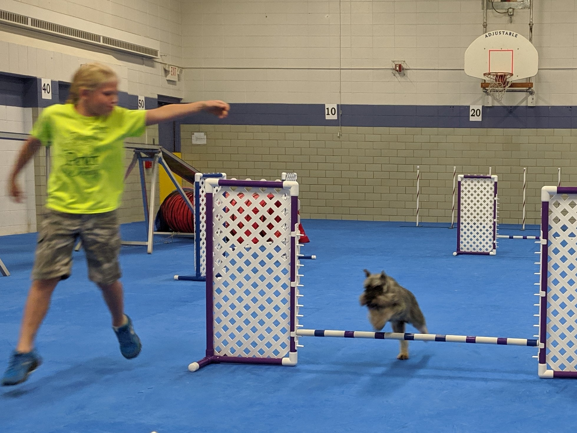 COULEE AGILITY KIDS - Thursday 7:15pmTeams will be concentrating on specific handling on course. This includes front, rear and blind crosses as well as how to incorporate handling on short sequences. These sequences will begin with jumps and tunnels and will slowly add in weaves and contacts.