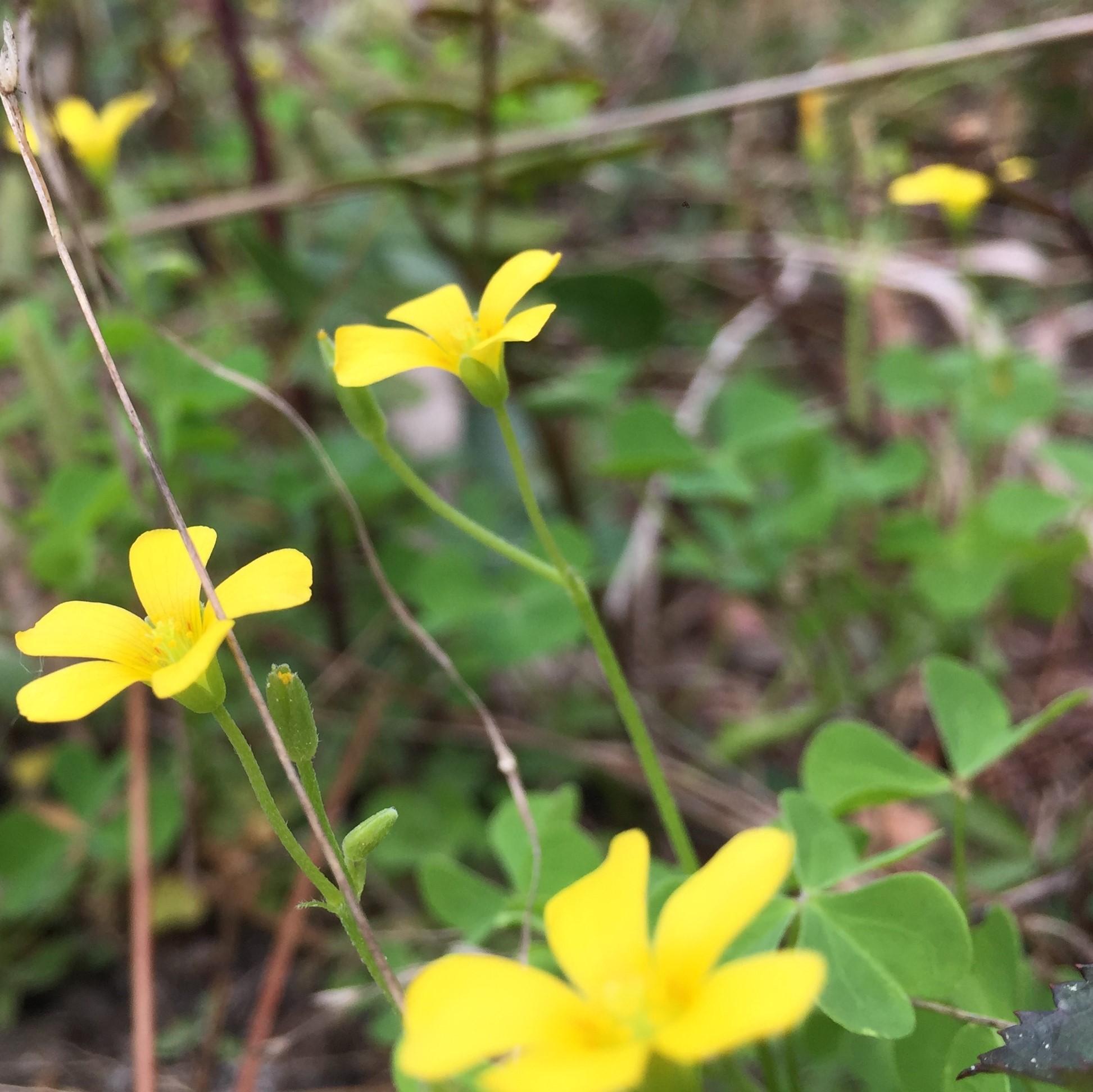 NaturalBridge031818.jpg
