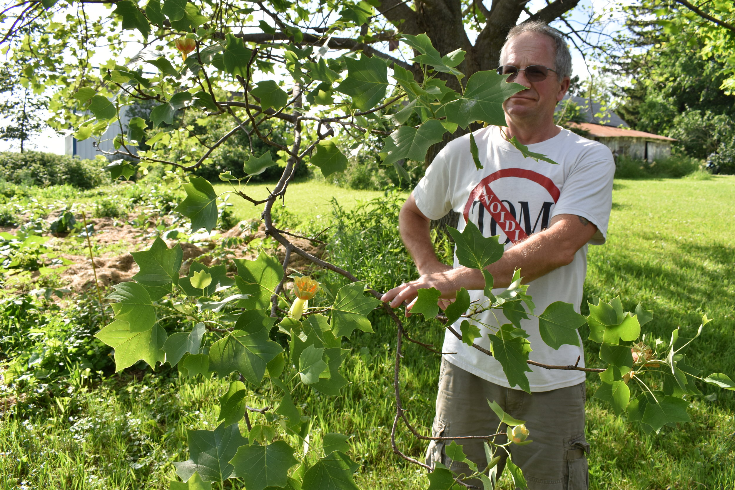 Rick and his beloved Tulip tree