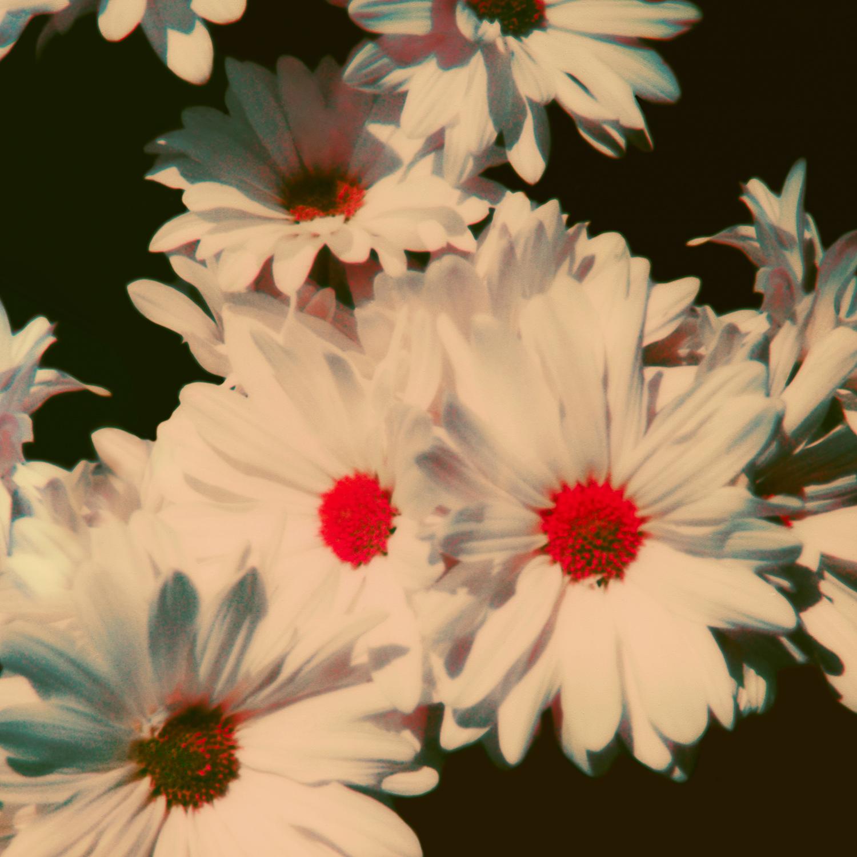 13 - Lana Del Rey - Neil Krug.jpg