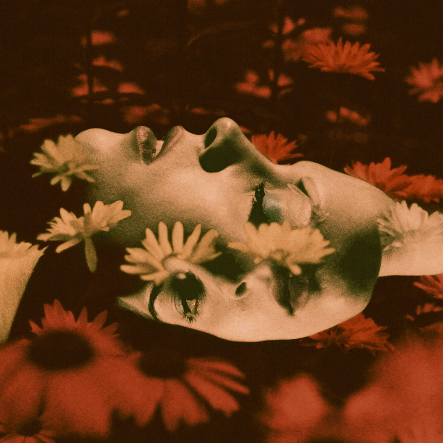 1 - Embry Dream Scene - Neil Krug.jpg