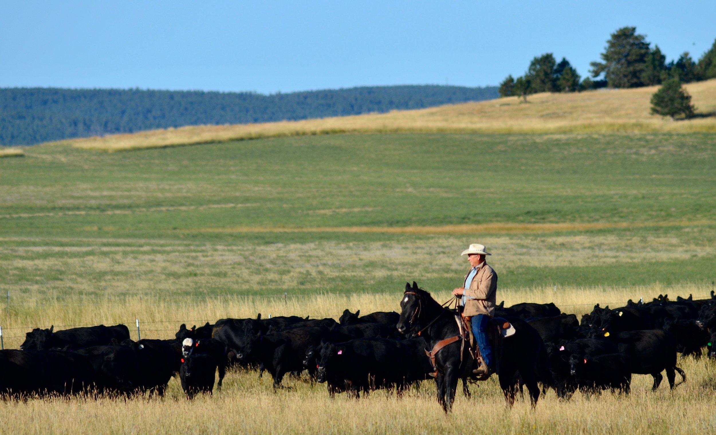 MM Beef Company--cowboy