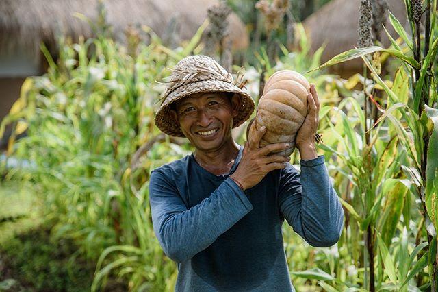 The absolute joy of growing what you eat.⠀ ⠀ ⠀ ⠀ ⠀ #manaubud #earthlyparadise #earthcompany #ecotourism #sustainabletravel #responsibletravel #travelgood #ecovilla #ecolodge #ecoretreat #environment #farmtotable #permaculture #sustainability #ubud #bali