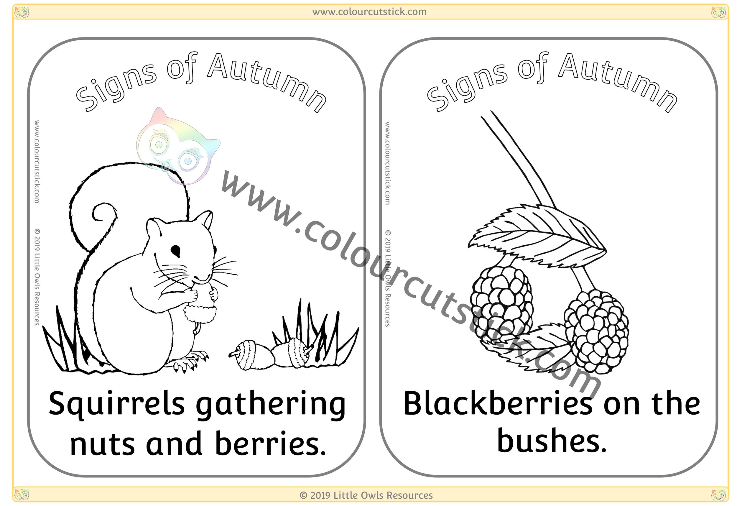 Squirrels gathering food & Blackberries -