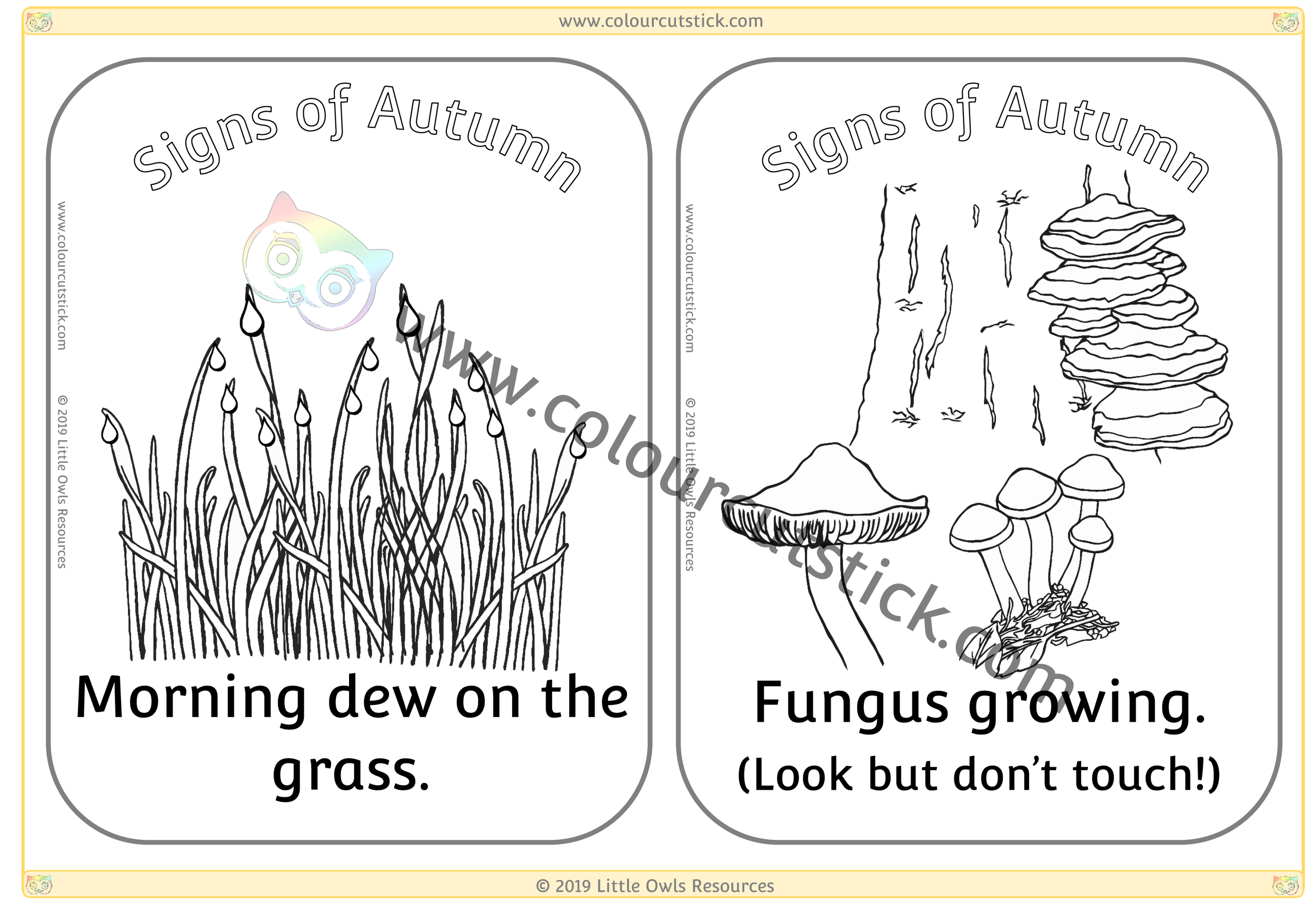 Morning dew on grass & Fungus growing -